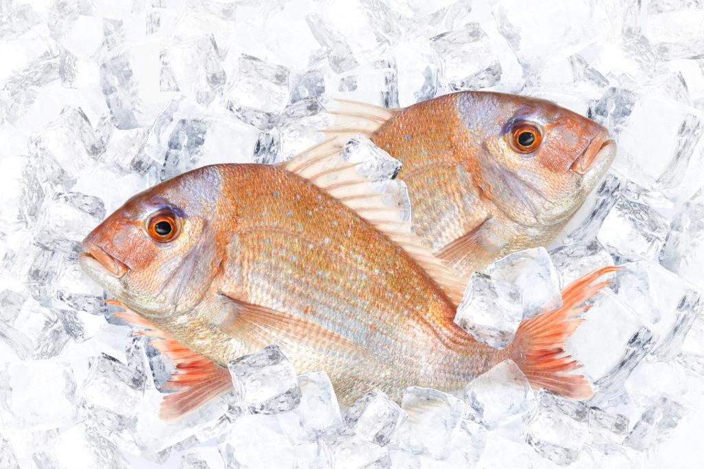 冷凍した魚の賞味期限