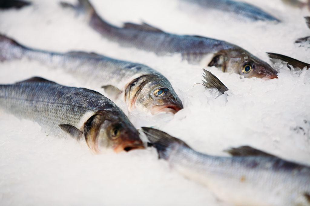 冷凍 日持ち 魚