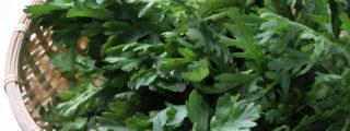 春菊の冷凍方法を写真付きで解説!【解凍と保存期間、レシピ5選】