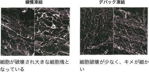 緩慢凍結 細胞が破壊され大きな細胞塊となっている デパック凍結 細胞破壊が少なく、キメが細かい
