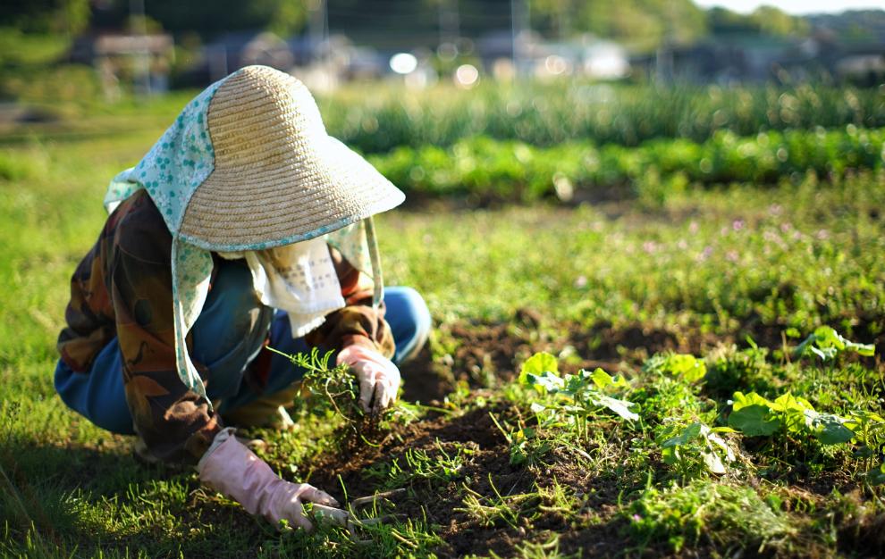 農業・農家