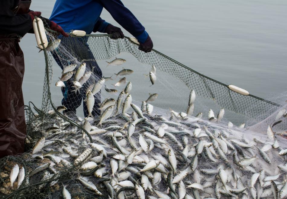 水産業・漁業組合の課題を解決