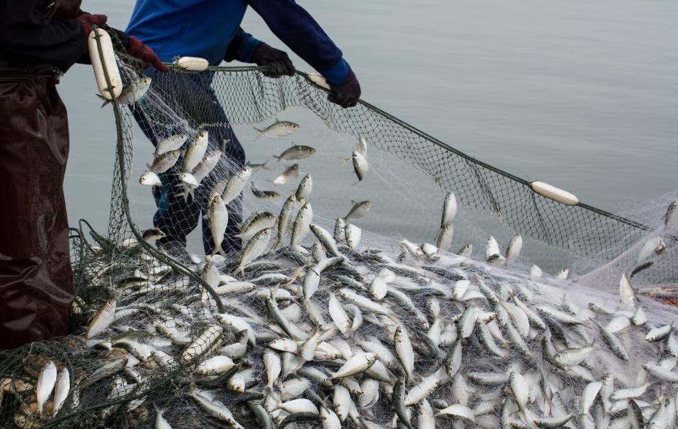 水産業・漁業協同組合