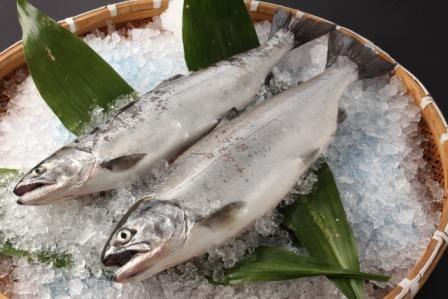 米田工機のリキッドフリーザー漁業協同組合連合会