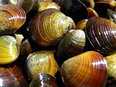 漁業協同組合連合会