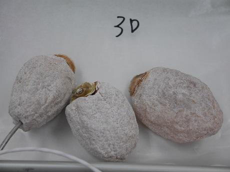 3Dで干し柿の冷凍