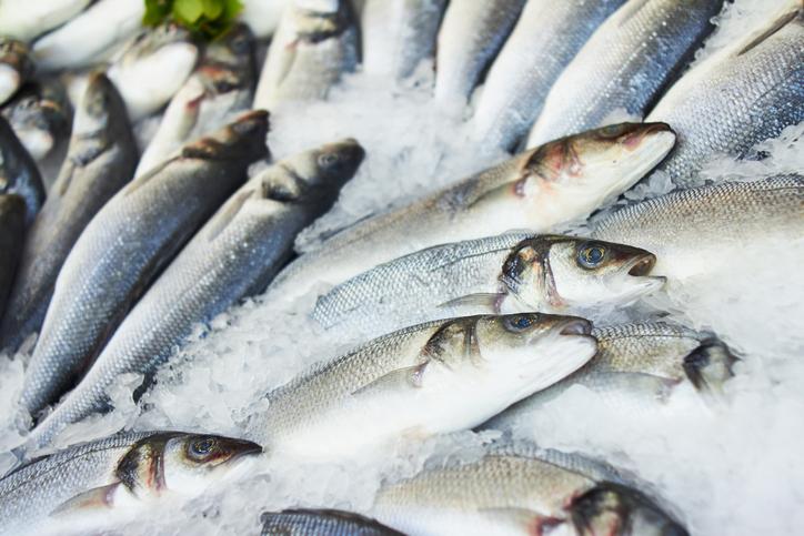 急速冷凍魚